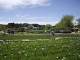 菖蒲園 風景
